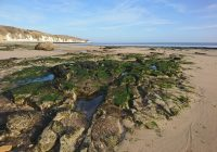 The Beaches of Flamborough Head – Guide