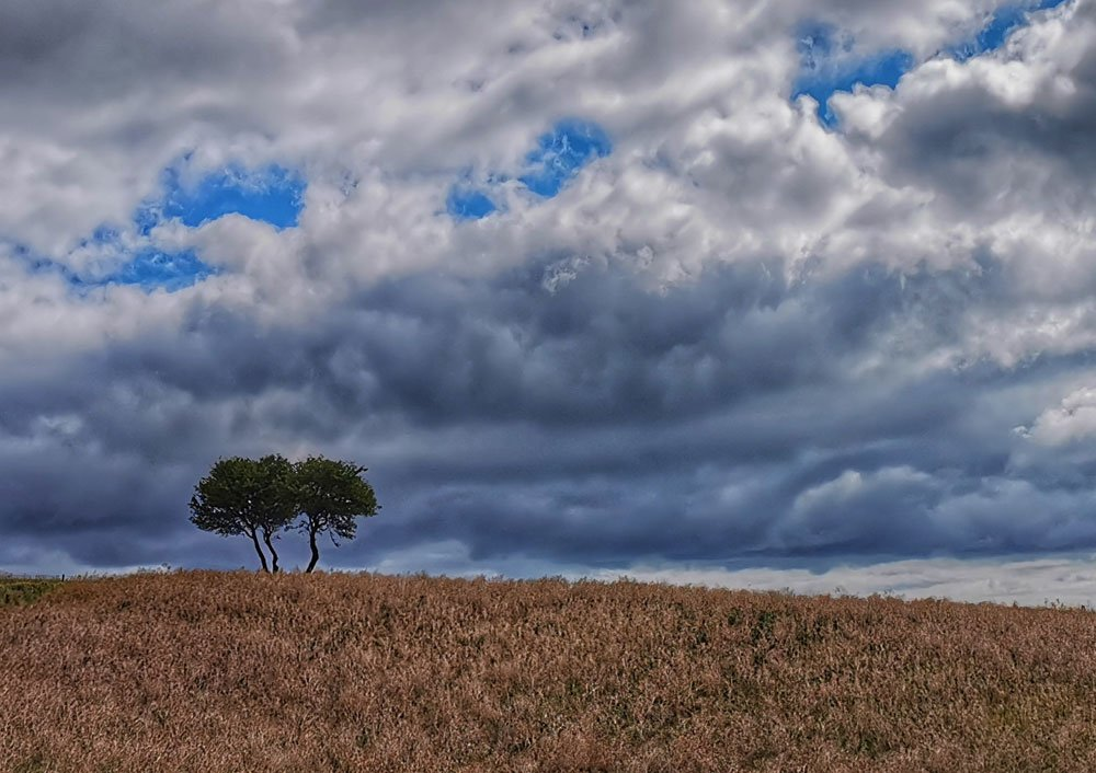 Lone Trees above Camp Dale