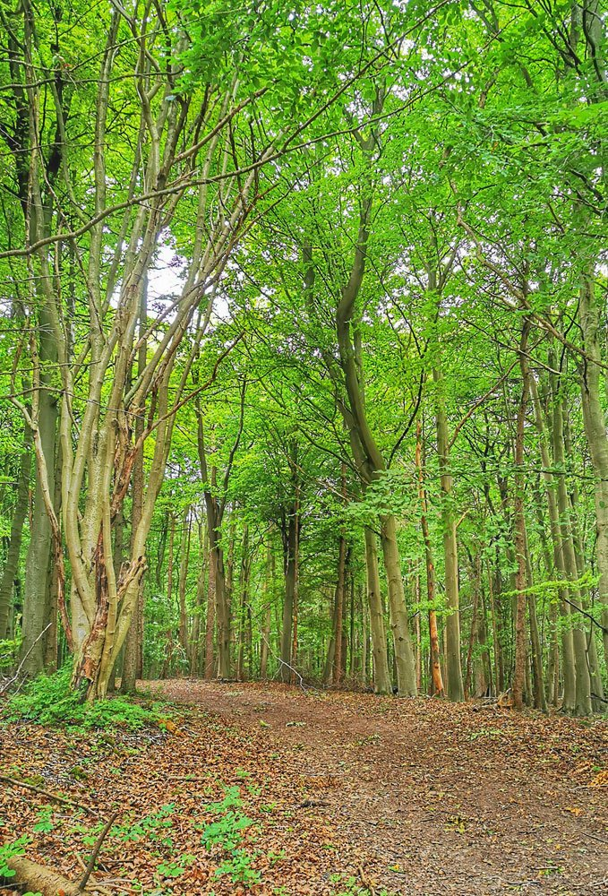 woods-above-Staxton