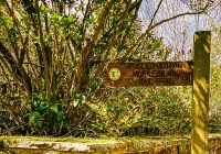 Walk from Grosmont to Beck Hole and Goathland